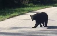 В США полицейские остановились, чтобы поболтать с медведем