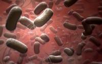 Антибиотики беспомощны перед новым штаммом сальмонеллы