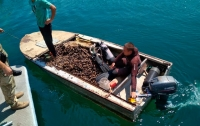 В Одессе у рыбаков изъяли 850 кг мидий и лодку