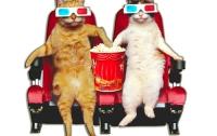 Разыскивается «специалист по кошачьему видео»