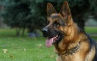 На Николаевщине пес спас ребенка от самоубийства