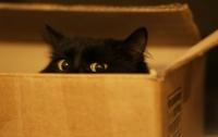 Названа неожиданная опасность домашних кошек