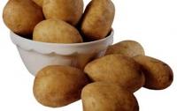 Украина закупит дешевую голландскую картошку