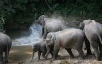 Голодный слон напал на туристку
