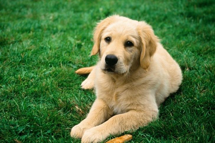 Ученые: собаки умеют говорить слюдьми