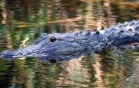 Крокодилы чуть не съели вора, сбегающего от полиции