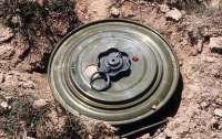 Возле детской площадки в Запорожье обнаружили противопехотные мины (видео)