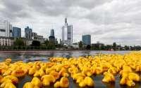 В американському штаті узаконили перегони гумових качок
