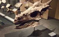 В США нашли скелет динозавра возрастом 66 млн лет