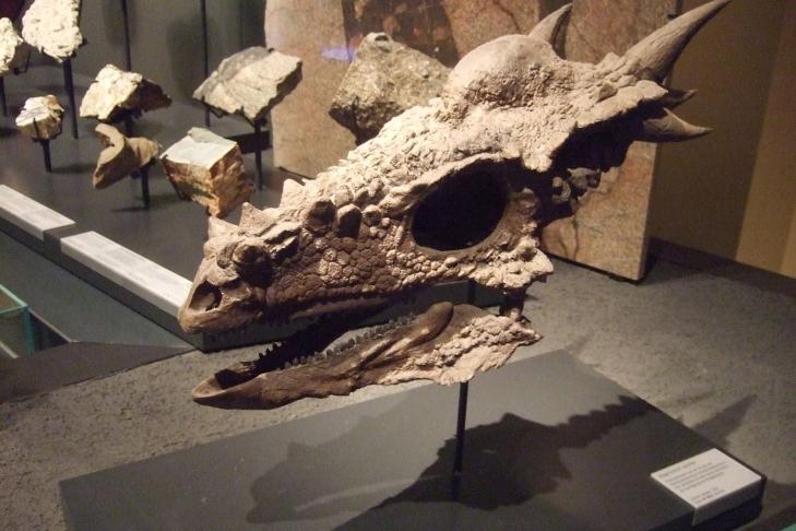 В США нашли останки динозавра возрастом 66 миллионов лет [видео]