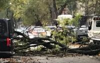 Шторм в Одессе: деревья падали и громили авто (видео)
