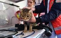 Ветеринар назвала признаки высокой температуры у кошек и собак