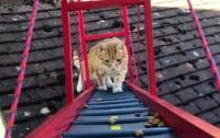 Британец построил своему коту настоящий мост