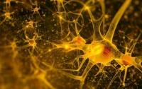 Новая технология позволила запечатлить образы нейронной деятельности