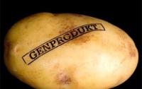 Первый ГМО-картофель вскоре войдет в рацион европейцев