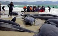 У берегов Новой Зеландии происходит массовое самоубийство