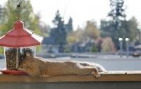 Экологи: жизнь в городе провоцирует рак у животных