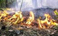 Украинцев будут штрафовать за брошенный фантик в лесу