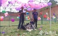 В Китае впервые официально поженились собаки