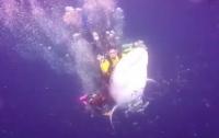 Индонезийского дайвера арестовали за катание верхом на акуле (видео)