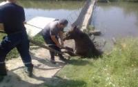 В Хмельницкой области трясина засосала коня