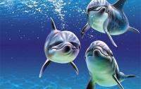 У дельфинов и китов сегодня праздник
