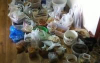 Полицейские изъяли 500 килограммов янтаря в Ривненской области