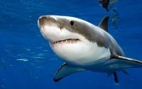 Американец встретил акулу, убегая от полиции (видео)