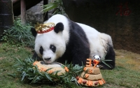 Старейшая в мире панда отпраздновала день рождения с тортом и подарками