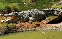 Дипломаты встретились и обсудили мясо крокодила