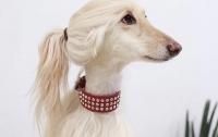 В сети показали собаку с прической как у Иванки Трамп (ФОТО)