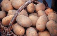 Украина на пятом месте в мире по производству картофеля, - Минагрополитики