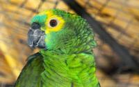 Полицейские задержала попугая во время ограбления