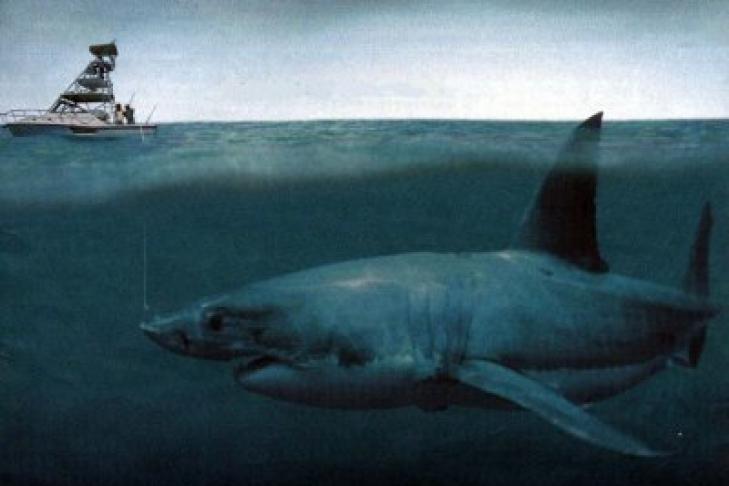 Ученые установили причину вымирания акул-мегалодонов на Земле