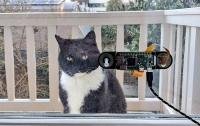 Инженер придумал систему распознавания, чтобы пускать домой своего кота