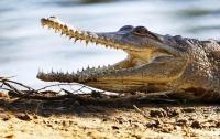 Крокодил растерзал плававшего в реке подростка
