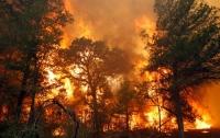 Жители Майорки эвакуированы из-за лесного пожара
