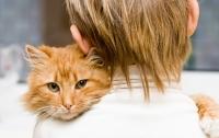 Голодные кошки предпочли еде общение с людьми