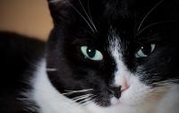 Пропавший кот воссоединился с хозяином спустя девять лет