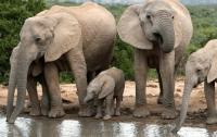 Жуткое ЧП в Индии стало причиной смерти семьи слонов