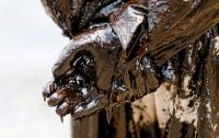 В США рассказали, как позаботятся о ценах на нефть