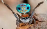 Самый красивый паук в природе (ФОТО)
