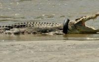 В Мексике толпа бросила насильника в вольер с крокодилами
