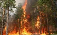 Лесные пожары в Калифорнии: появились подробности