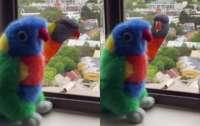 Попугаи приняли игрушку за собрата и насмешили пользователей интернета