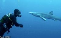Столкнувшийся с акулой дайвер отделался поцелуем (видео)