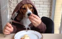 Пес, использующий нож и вилку, собрал миллионы просмотров в Сети (видео)