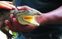 Новорожденному принцу Кембриджскому подарили крокодила