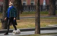 Врач дал рекомендации по выгулу собак на время ограничений