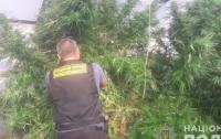 На Житомирщине у мужчины изъяли наркотиков на 1,2 миллиона гривен